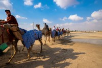 http://photoimran.com/files/gimgs/th-20_IA-Dubai_camel_2014-1007.jpg